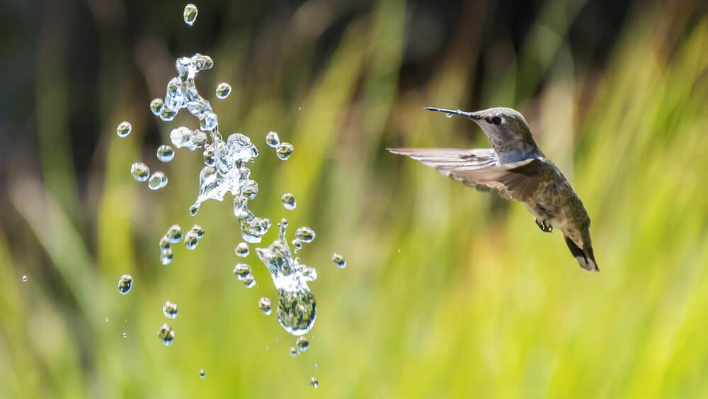 Hummingbird ermöglicht auf kompliziertere Fragetypen die passenden Antworten zu liefern