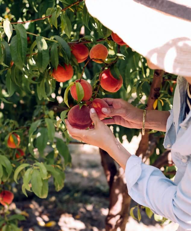 Mit White hat SEO risikofrei die besten Früchte ernten